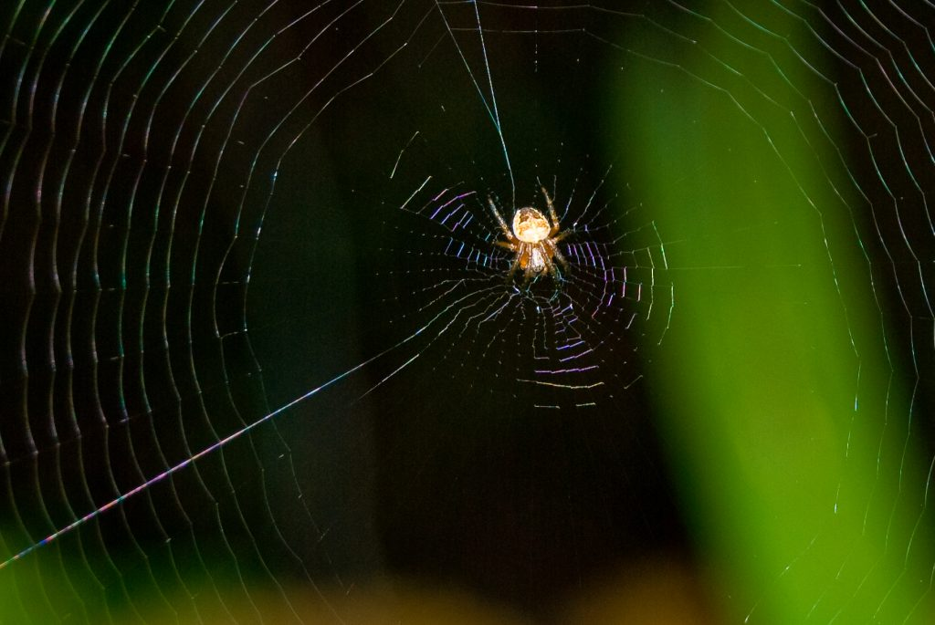 Oh What a Web